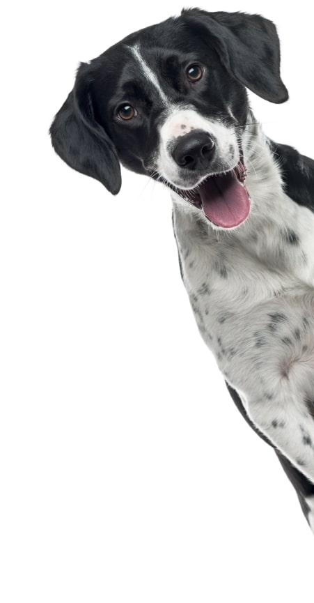 Club de mascotas Momo, Servicios veterinarios, Club de mascotas bucaramanga