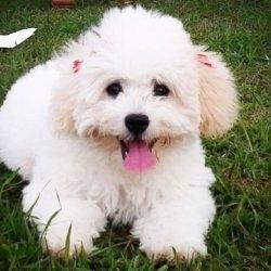 Imagen de perfil mascotas momo